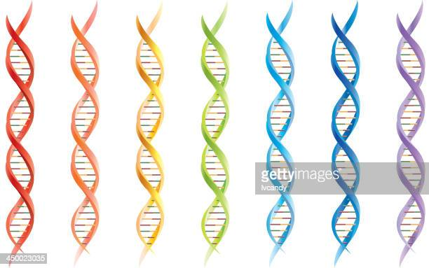 dna-segmente - helix stock-grafiken, -clipart, -cartoons und -symbole