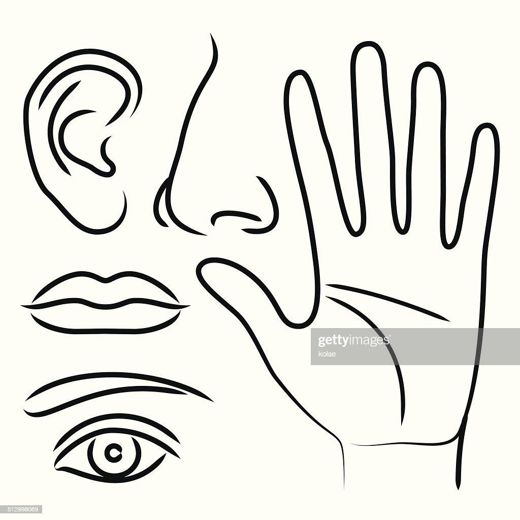 Órganos Sensorial Mano Oídos Nariz Boca Y Los Ojos Arte vectorial ...