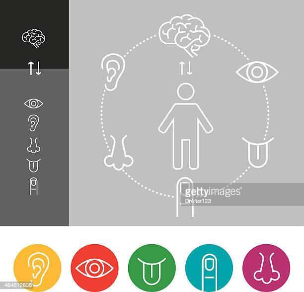 ilustraciones, imágenes clip art, dibujos animados e iconos de stock de percepción sensorial grupo de iconos - oreja