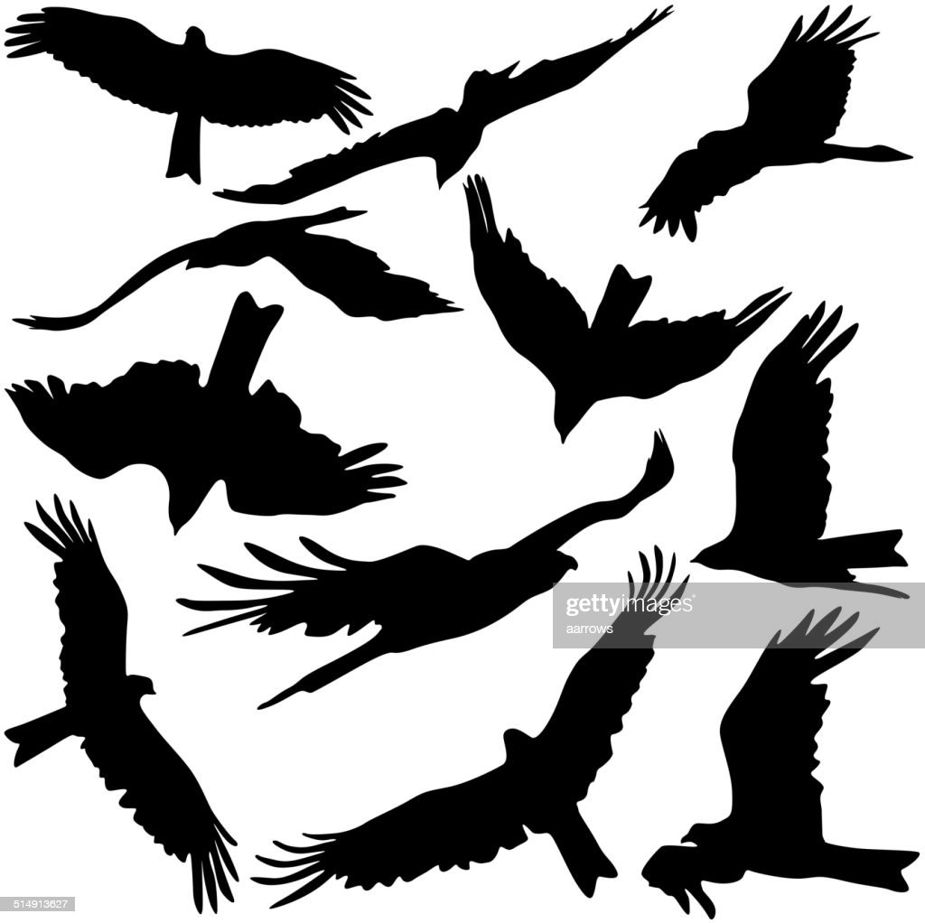 Set black silhouettes of prey eagles