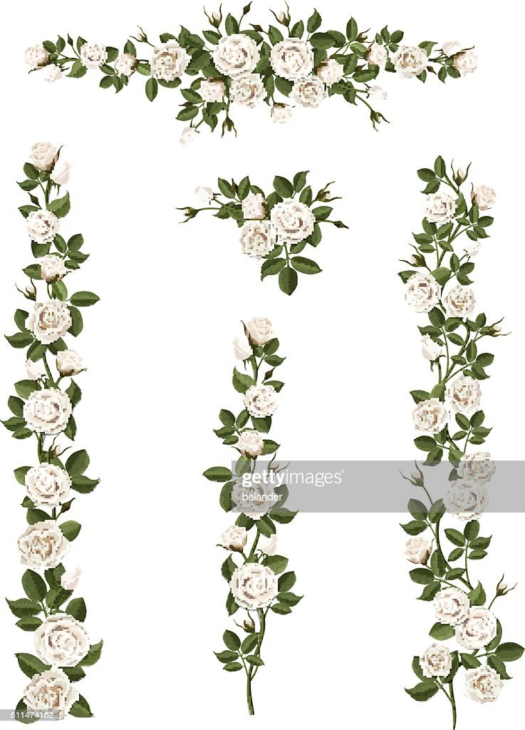 set brushes flowers climbing white roses