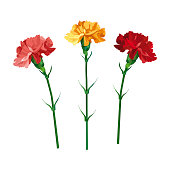 Set carnation flowers. Yellow, pink and red carnation. Isolated on white. vector illustration. Collection for Mother's Day, victory day