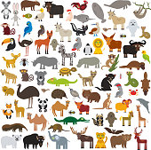 set Cartoon Animals from all over the world. Australia, North and South America, Eurasia, Africa isolated on white background. Vector