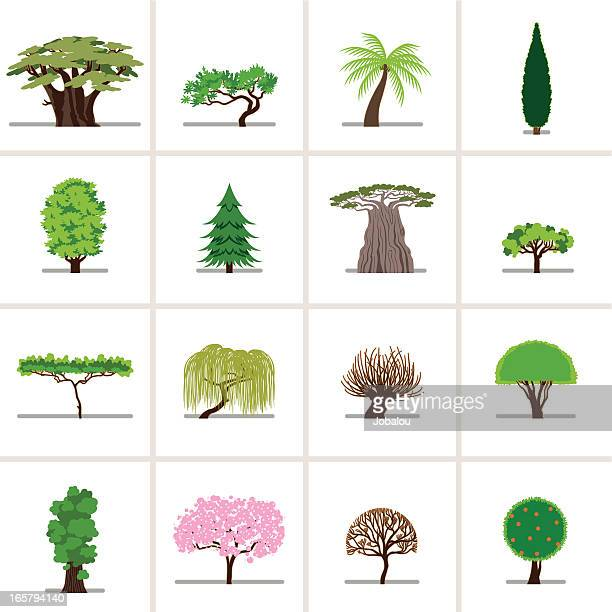 set cartoon trees - ash stock illustrations, clip art, cartoons, & icons
