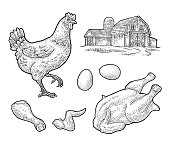 Set chicken. Whole hat, leg, wing, egg and farm. Vintage engraving