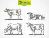 Set cows in graphic style