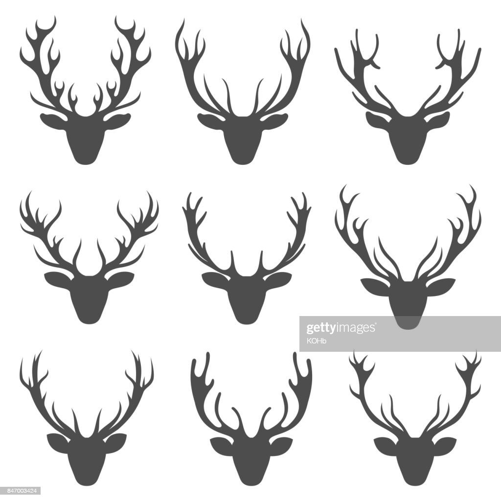 Set Deer Heads, Collection Stag Horns, Isolated on White Background