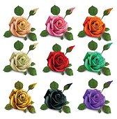 set diferent flowers roses. red black white gold pink beige