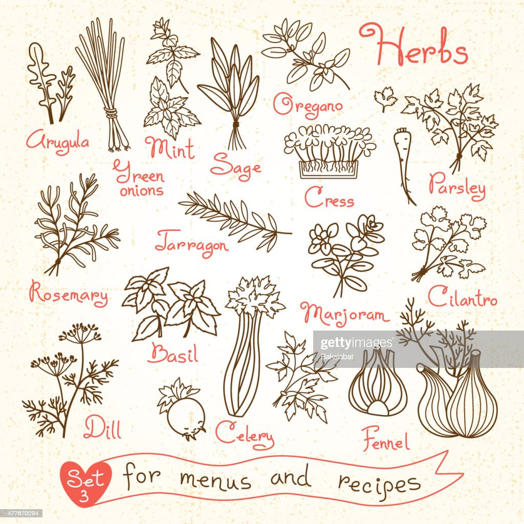 Set drawings of herbs for design menus, recipes and packages