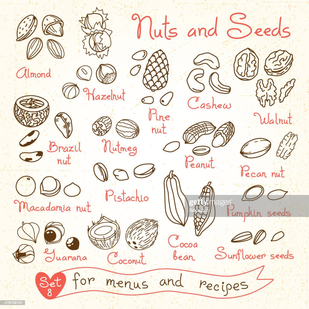 Set drawings of nuts and seeds for design menus, recipes