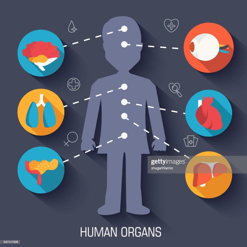 set flat human organs icons illustration infographic concept
