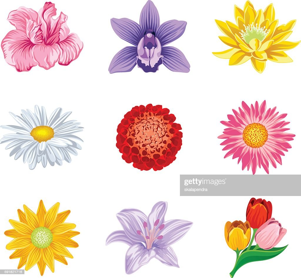 Set flower