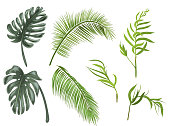 Set green leaves of tropical plants: coconut palm, monstera, chamaedorea elegans (bamboo palm) on white background, digital draw, realistic vector botanical illustration for design
