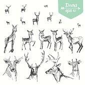 Set hand drawn deers vintage illustration sketch