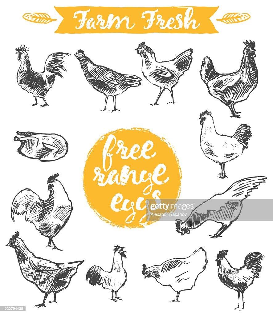 Set hand drawn eggs farm fresh chicken meat vector