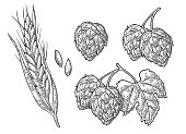 Set hop herb plants with leaf and Ear of wheat.