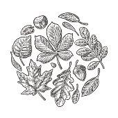 Set leaf. Vector vintage engraved illustration.