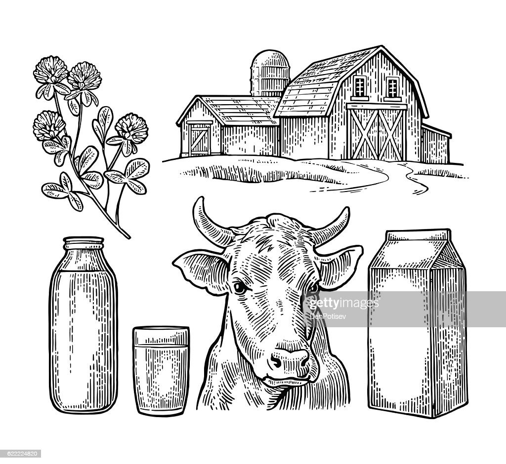 Set Milk farm. Cow head, clover, box carton package, bottle.