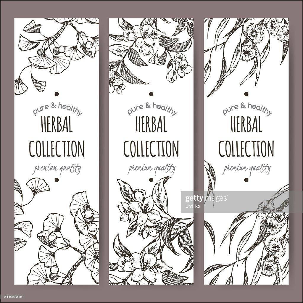 Set of 3 vector labels with Ginkgo biloba, jasmine, eucalyptus