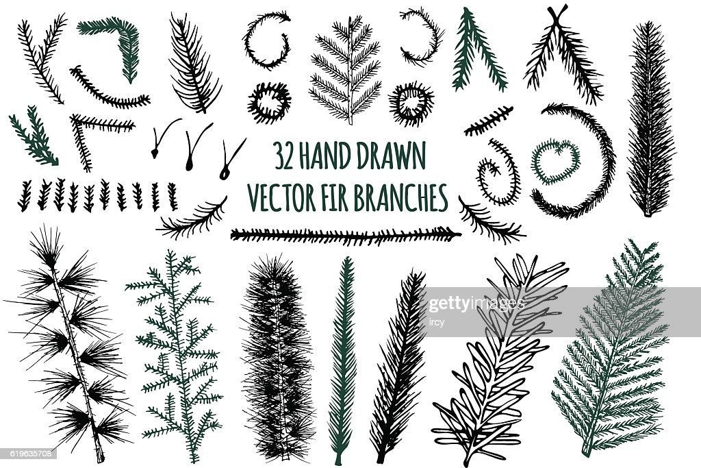 Set of 32 Hand Drawn Fir Branches