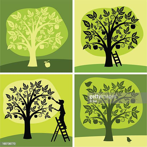 stockillustraties, clipart, cartoons en iconen met set of 4 green & black illustration of an apple tree - appelboom