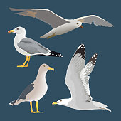 Set of 4 sea gulls. Hovering, soaring, standing, with folded wings, resting, curious. Flying mew. long neck, white feathers