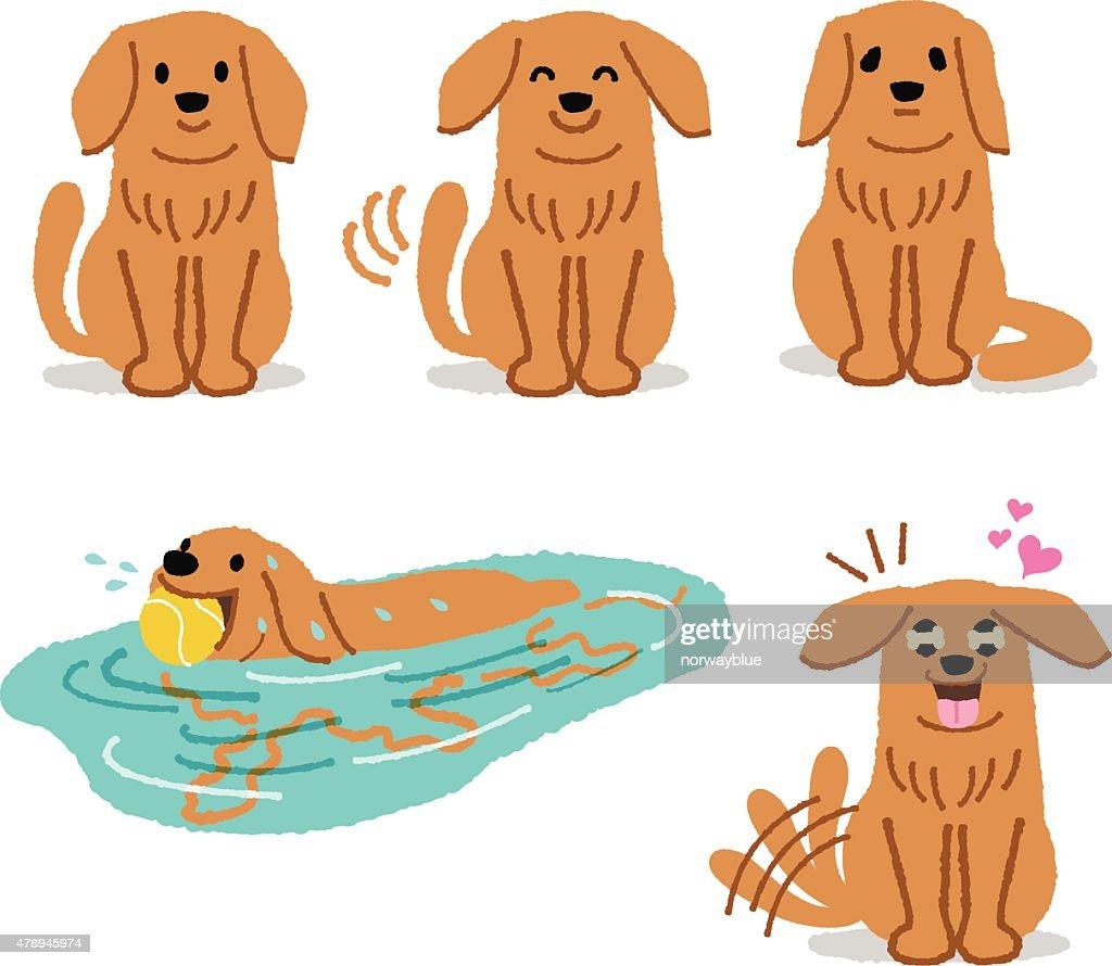 Set of adorable Golden Retriever expression