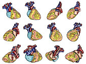 Set of Anatomical human heart sketch isolated on background. Hand drawn engraving style cartoonish flash tattoo design. Vector.
