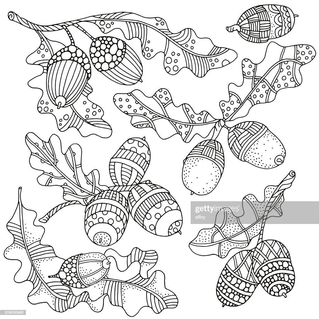 Set of artistically hand drawn acorns and oak leaves