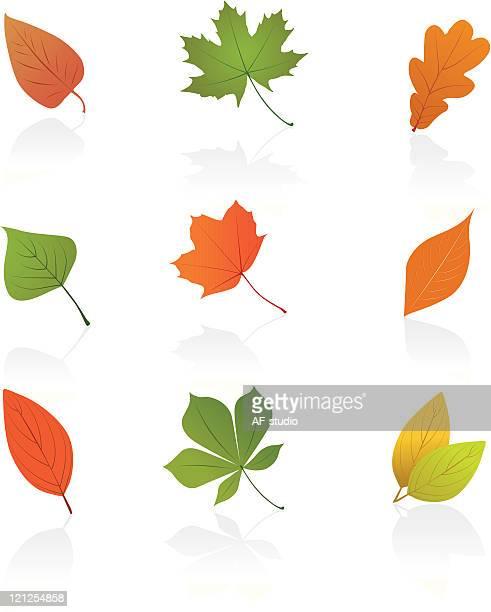 autumn leafs の