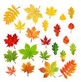 Set of autumn leaves isolated on white background. Vector illustration.