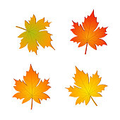 Set of autumn vector maple leaves
