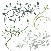 Set of beautiful vector decorative branches with leaves