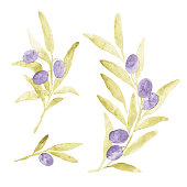 Set of beautiful vector watercolor olive branches with leaves.