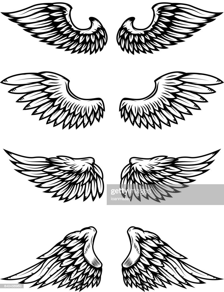 Set of bird wings isolated on white background.