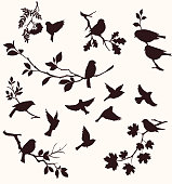 Set of birds and twigs.  Decorative silhouette of  birds sitting on tree branches: oak, maple, birch, rowan and others. Flying birds