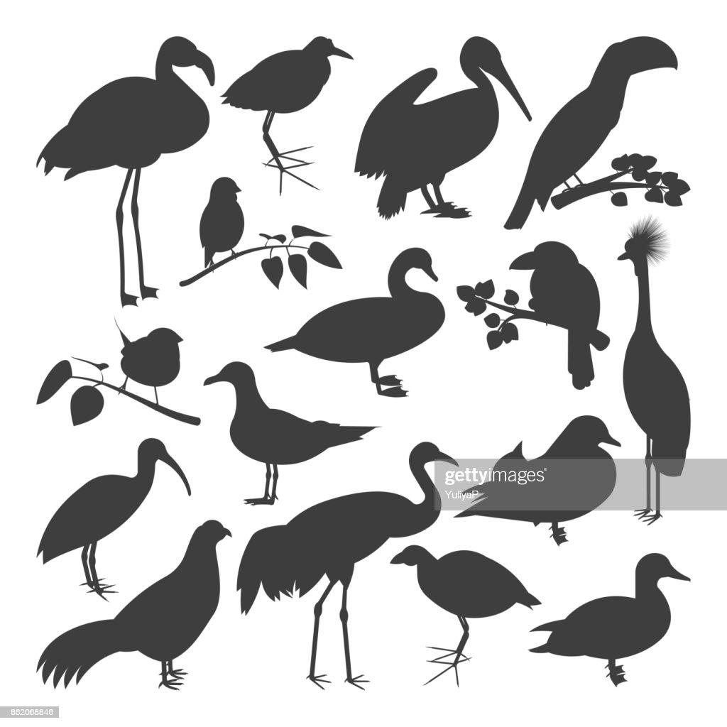 Set of birds' silhoettes
