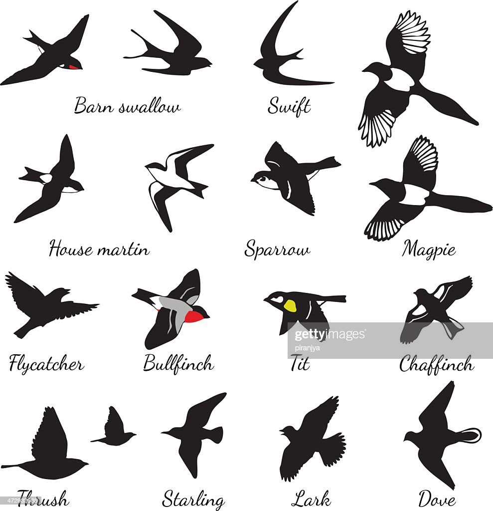 Set of black isolated vector silhouettes of birds