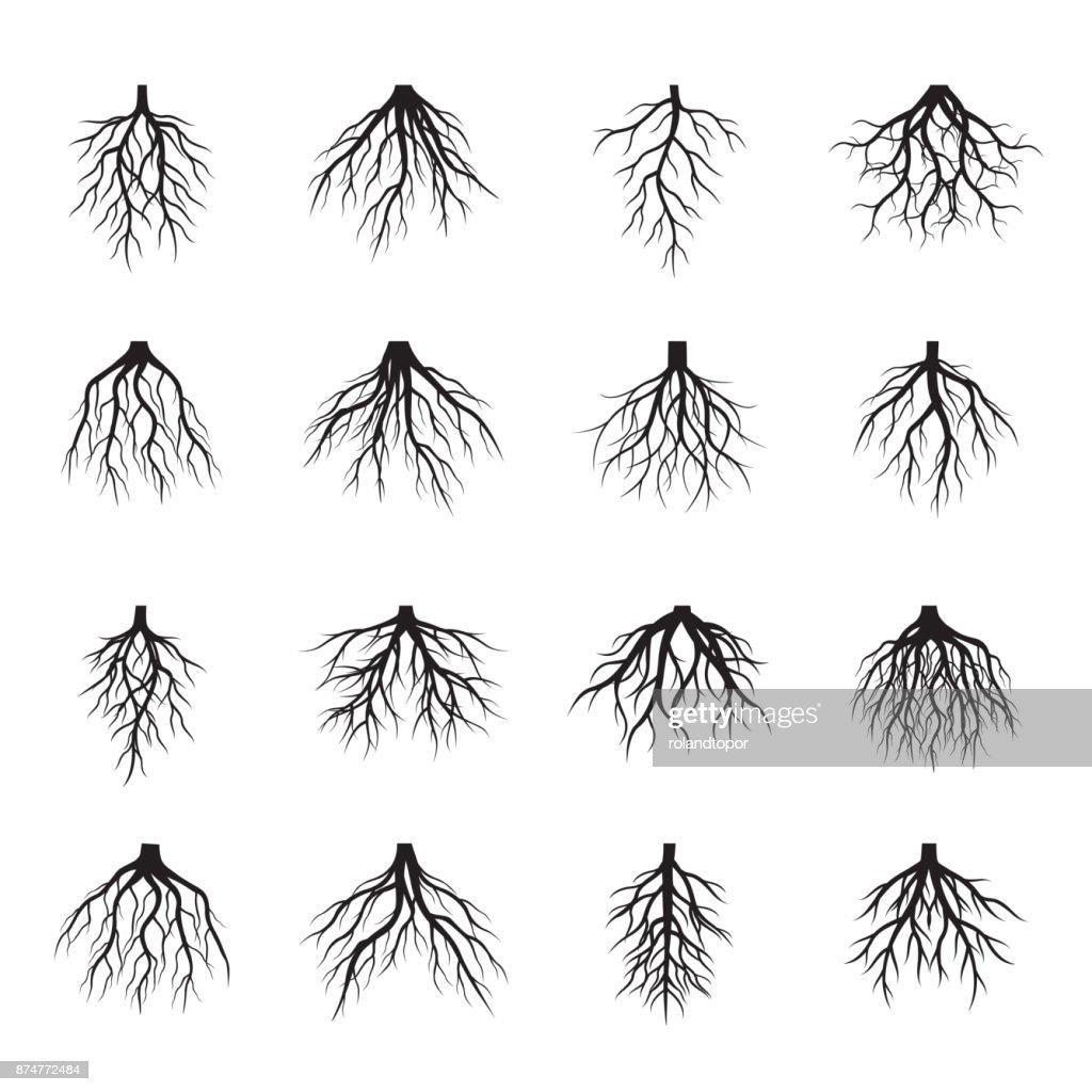 Set of black Roots Tree. Vector Illustration.