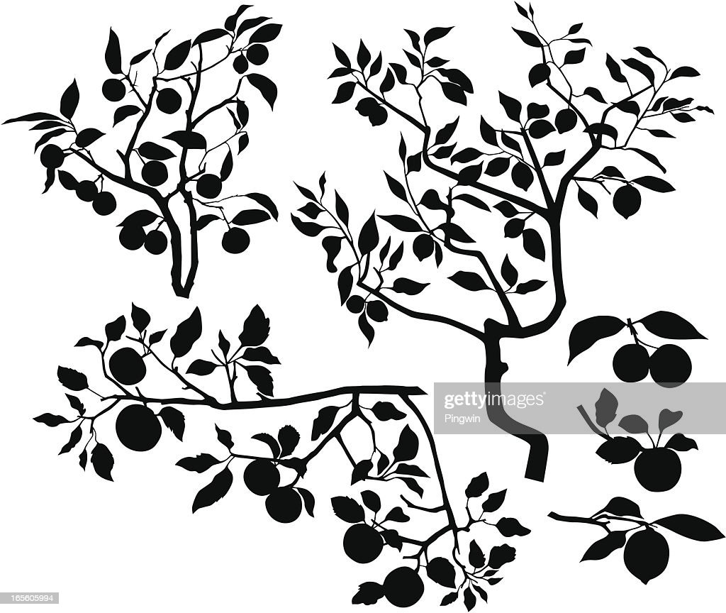 Set of branches with fruits