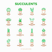 Set of cactus and succulents in pots. Thin line icons. Modern vector illustration of plants for house decoration.