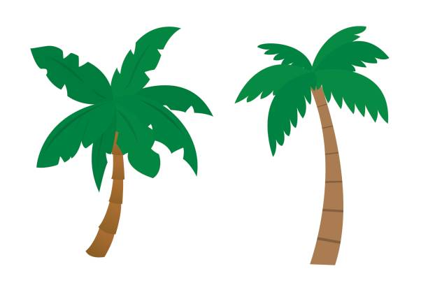 Set Of Cartoon Palms With Brown Trunk And Green Leafs Painted By Flat Design