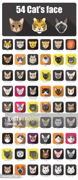 set of cat flat icons, vector illustration - undomesticated cat stock illustrations