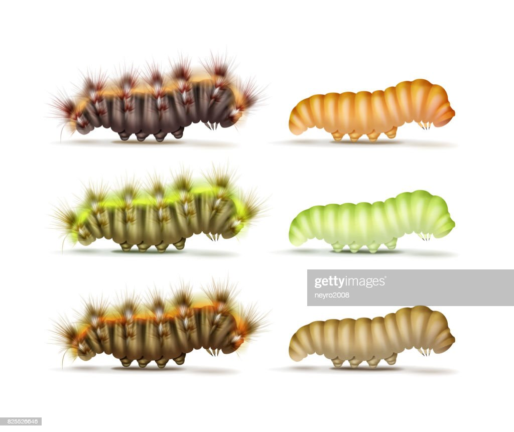 Set of caterpillars