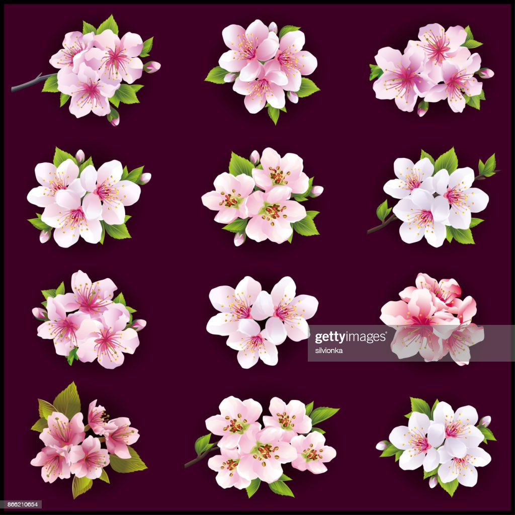 Set of cherry and apple blossom