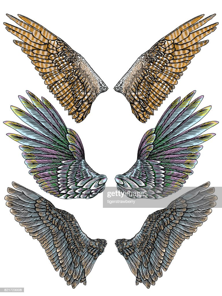Set of colorful bird wings of different shape in open position isolated. Collection of colourful illustrations with angel wings. Freehand drawing. Hand drawing tattoo vintage body art concept vector.