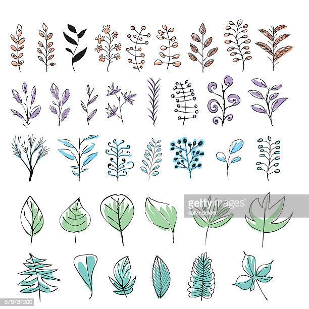 set of colorful hand drawn leaves - branch plant part stock illustrations