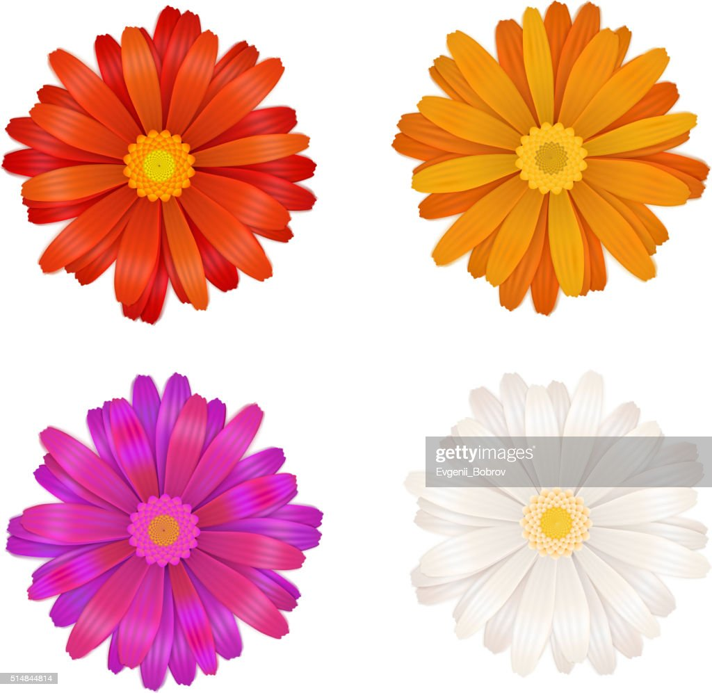 Set of colourful gerbera flowers on white