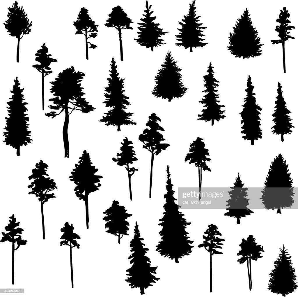 set of conifer trees
