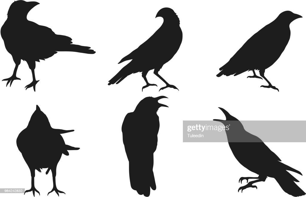 Set of crow vector on white background.